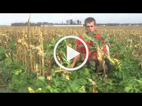 Results of Interseeded Cover Crops Fennig Equipment