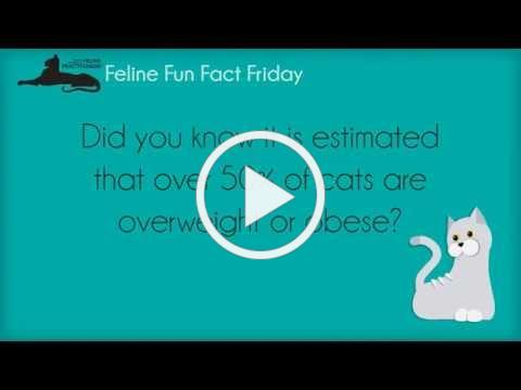 Feline Fun Fact Friday - Obesity