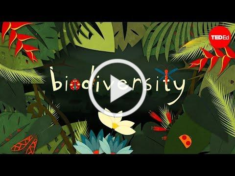Why is biodiversity so important?