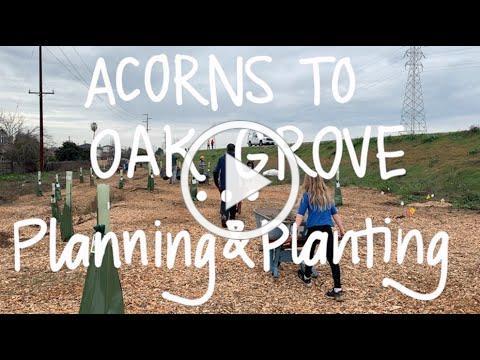 Acorns to Oak Grove: Planning & Planting