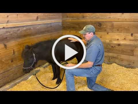 Facebook Live with a Pony, November 6th, 2020