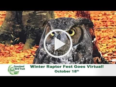 RaptorFest 15 v5