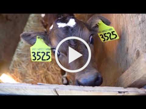 Virtual Field Trip: Bringing the Farm to Your School
