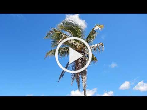 Palm tree meditation