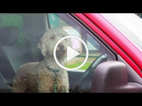 Dogs in Hot Cars - Alliance For Animals PSA 2