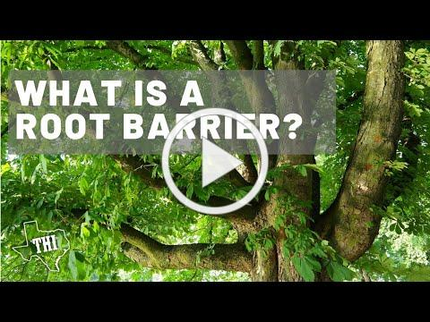 What Is A Root Barrier? - Jim Dutton