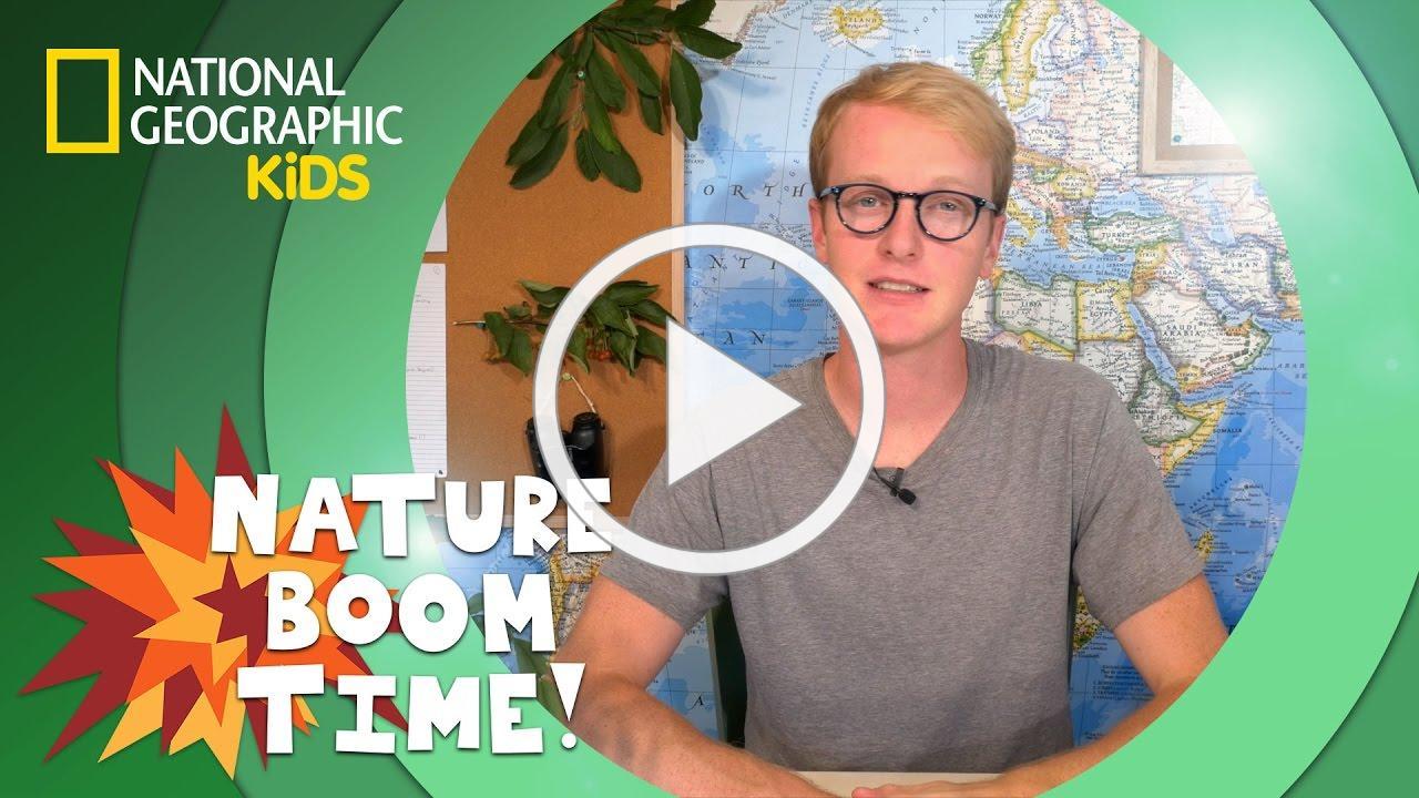 Coastal Redwoods vs. Giant Sequoias | Nature Boom Time