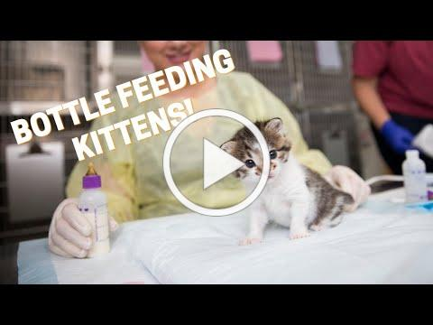 How To Bottle Feed Kittens!