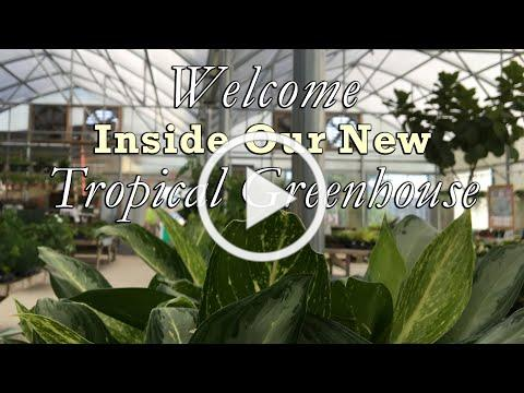 Welcome Inside Our New Greenhouse!