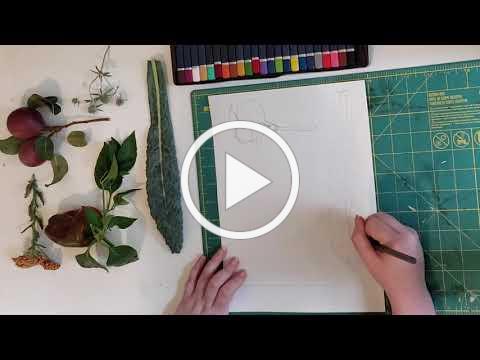 ART NOW Lesson 14: Botanical Illustration