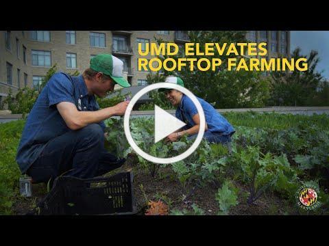 UMD Elevates Rooftop Farming
