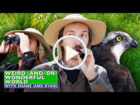 Shane & Ryan Go Birdwatching * Weird Wonderful World