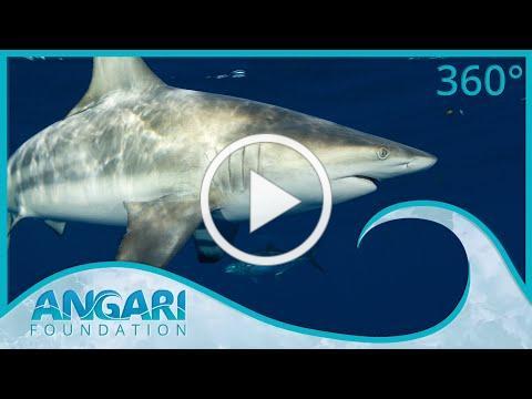 Generation Ocean: Sharks | Episode 2