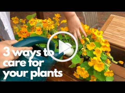 3 Ways to Care for your Plants