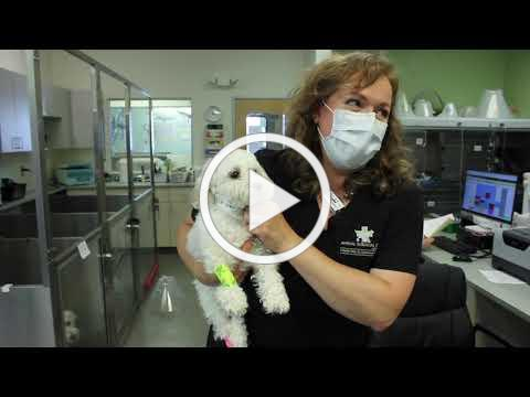 Licensed Veterinary Technician Experience at ASOC
