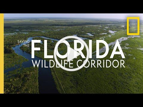 Saving the Florida Wildlife Corridor | National Geographic