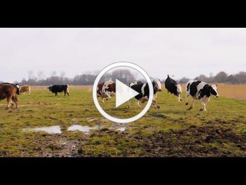 Butenland - Trailer