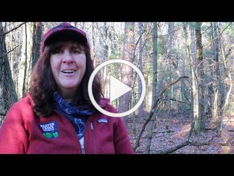 Trailside Treasures 15 - Wintergreen