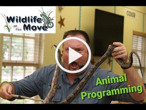 VIDEO - 2021 Wildlife On The Move Animal Programming