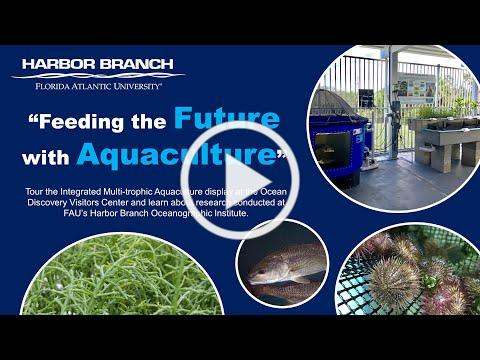 Feeding the Future with Aquaculture at FAU's Harbor Branch