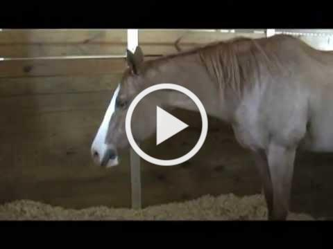 Releasing: Horse Karaoke with Jim Masterson