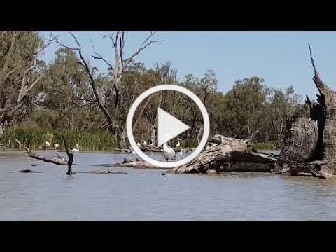 Canoe the Riverland