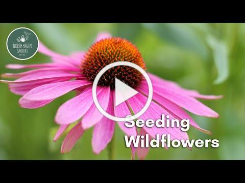 Seeding Wildflowers