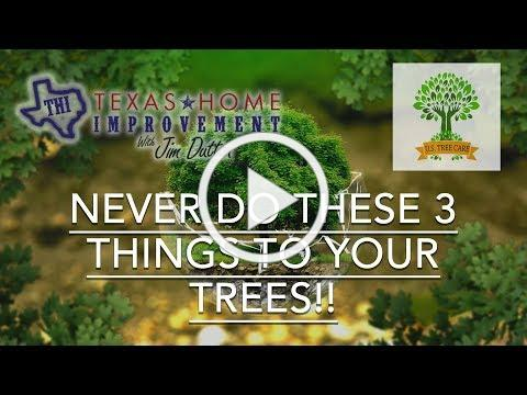 Never Do These 3 Things To Your Trees - Matt Latham
