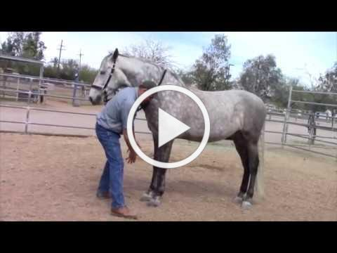 "Horse Massage: ""The Masterson Minute"" Jim teaches the Leg Forward Technique"