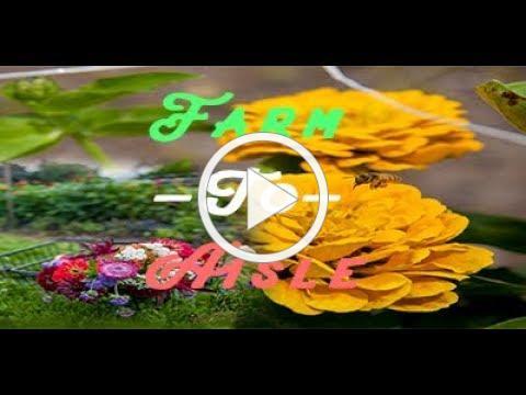 Terhune PYO flowers