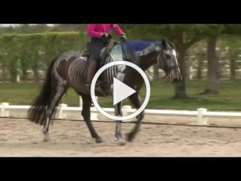Dressage Movements Revealed DVD: Video Clip 1