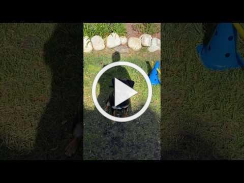 2020 Virtual DogWalk & FunFest - Best Trick Winner, River