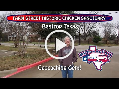 Why Did the Chicken Cross the Road? We Ask the Bastrop Chickens!