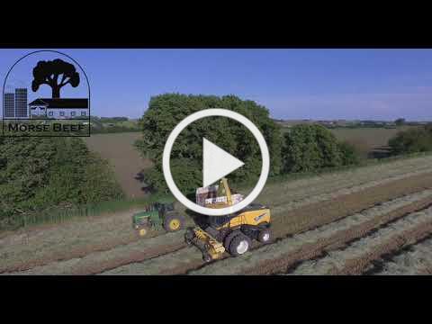 Morse Beef - Silage Harvest 2019