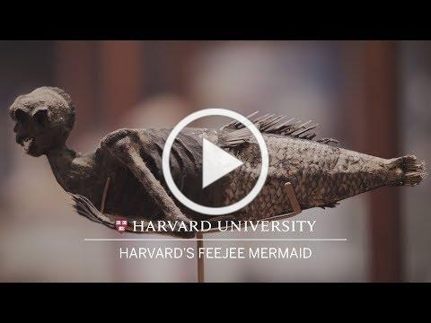 Harvard's FeeJee mermaid