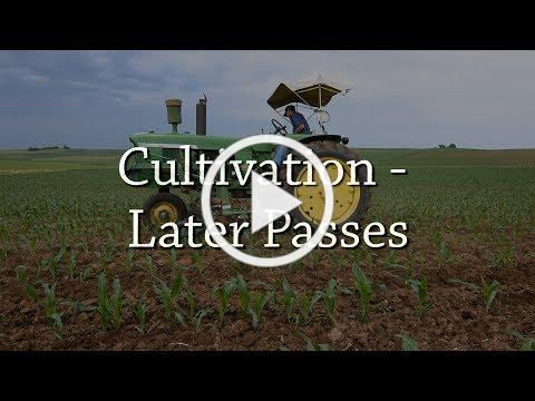 Cultivation - Later Passes - Organic Weed Control