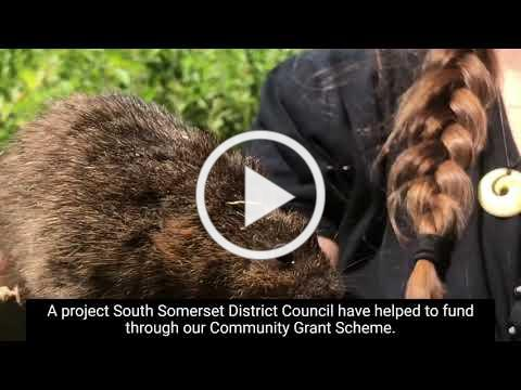 SSDC Community Grant helps reintroduce water voles at Ferne Animal Sanctuary