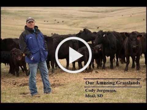 Our Amazing Grasslands   Jorgensen Partnership, Ideal, SD