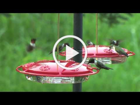 Wild Birds Unlimited - Hummingbird Feeders
