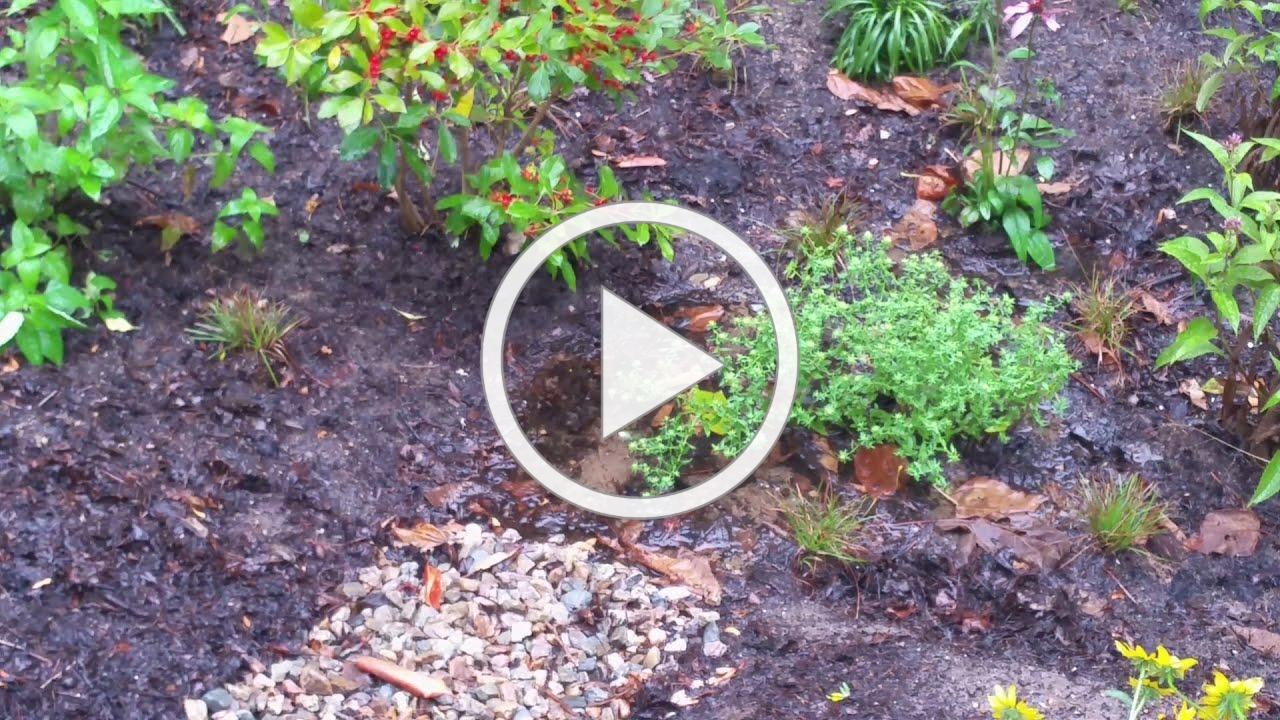 A Cape Cod Rain Garden at APCC