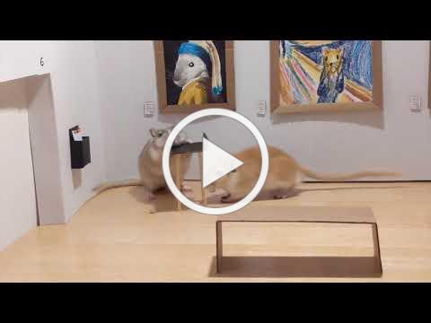 Gerbils Museum Opening