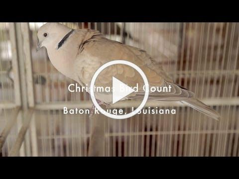 Audubon's Christmas Bird Count - Kids Who Bird