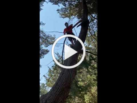 All About Trees - Raccoon Rescue