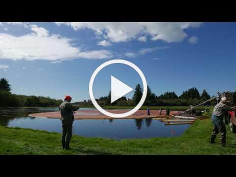Cranberry Harvest Time Lapse 2017