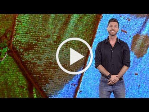 Aaron Pomerantz (UC Berkeley): Decoding Butterfly Color