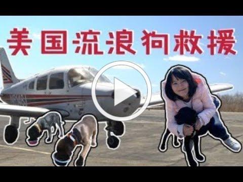 A Freedom Flight for Homeless Dogs 超酷美国大叔开私人飞机救流浪狗