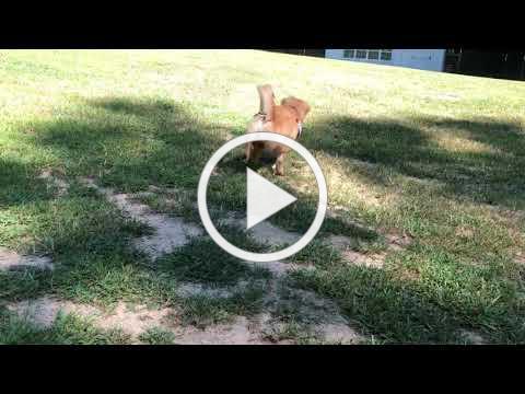 Gracie playing fetch