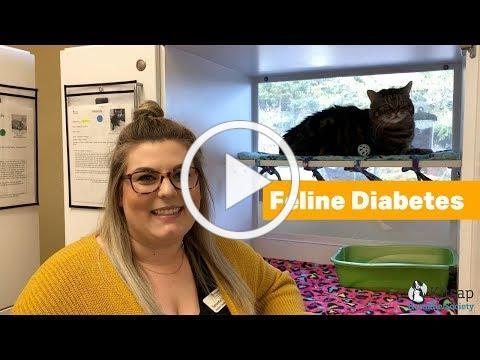 Learn about Feline Diabetes, featuring Miranda & Manuel