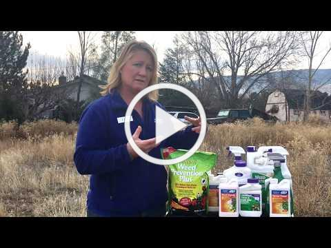 Winter Weed Control