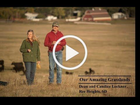 Our Amazing Grasslands ~ Lockner Ranch